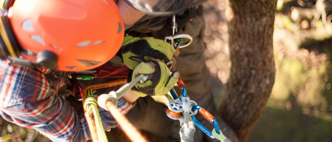 How To Carry Out An Effective Ariel Tree Rescue